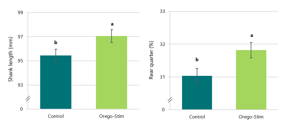 Pullets supplemented with Orego-Stim had significantly greater shank length and rear quarter percentage