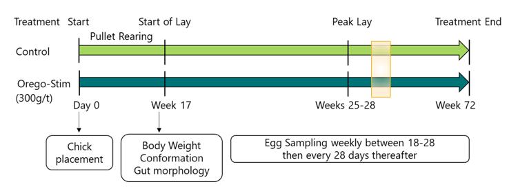 trial design schematic