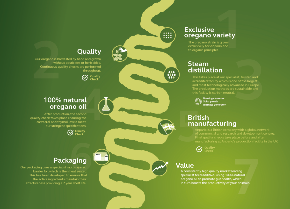 Orego-Stim High Quality from Process to Product